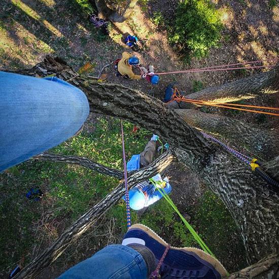 ロープで木登り